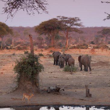 Dag Botswana, hallo Zambia