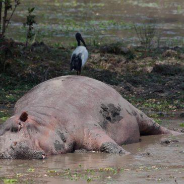 Van Lusaka naar South Luangwa National Park