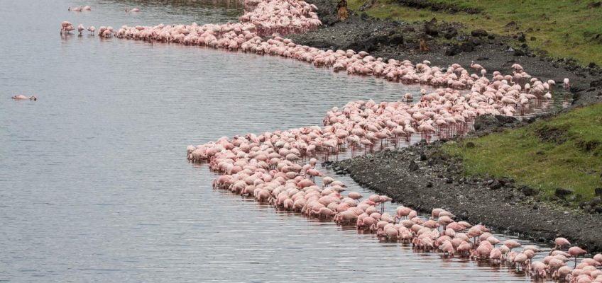 flamingos, Arusha National Park, Tanzania
