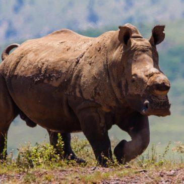 Zuid-Afrika (2) van Swaziland naar Lesotho