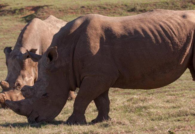 two rhinos, Addo Elephant Park