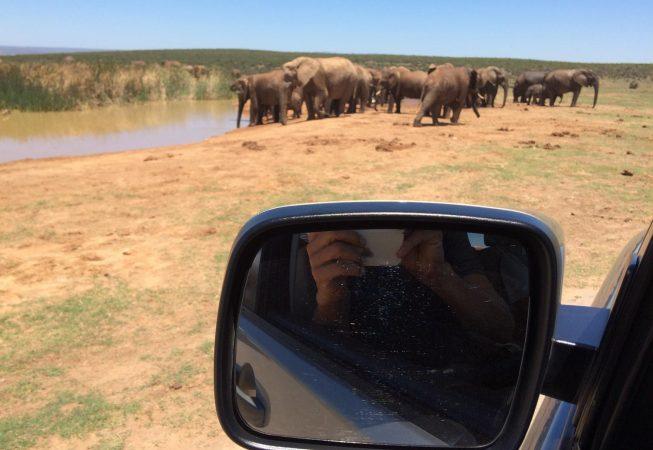 group of elephants in Addo Elephant Park